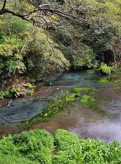 柿田川湧水のイメージ写真